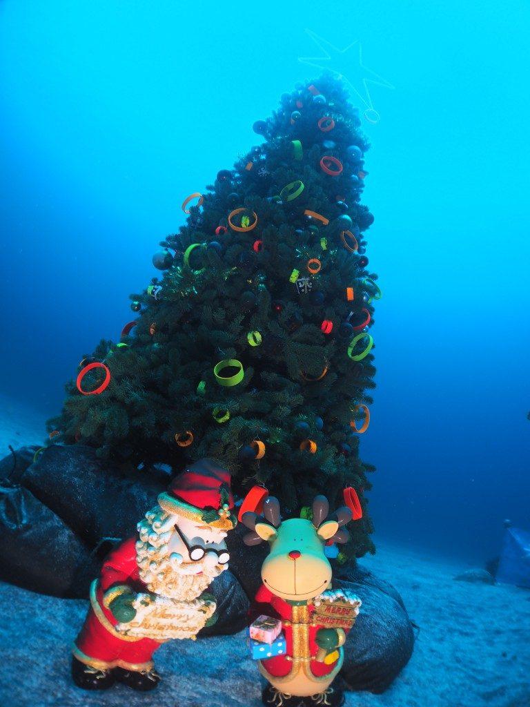 毎年恒例クリスマスツリー