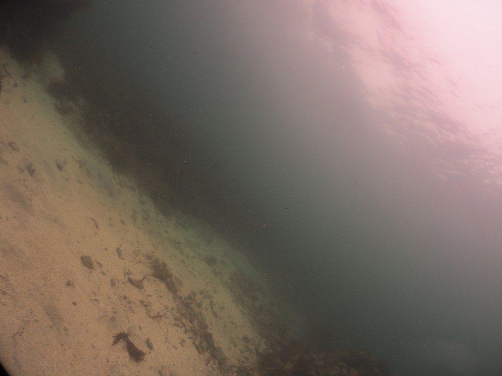 海洋実習2日目