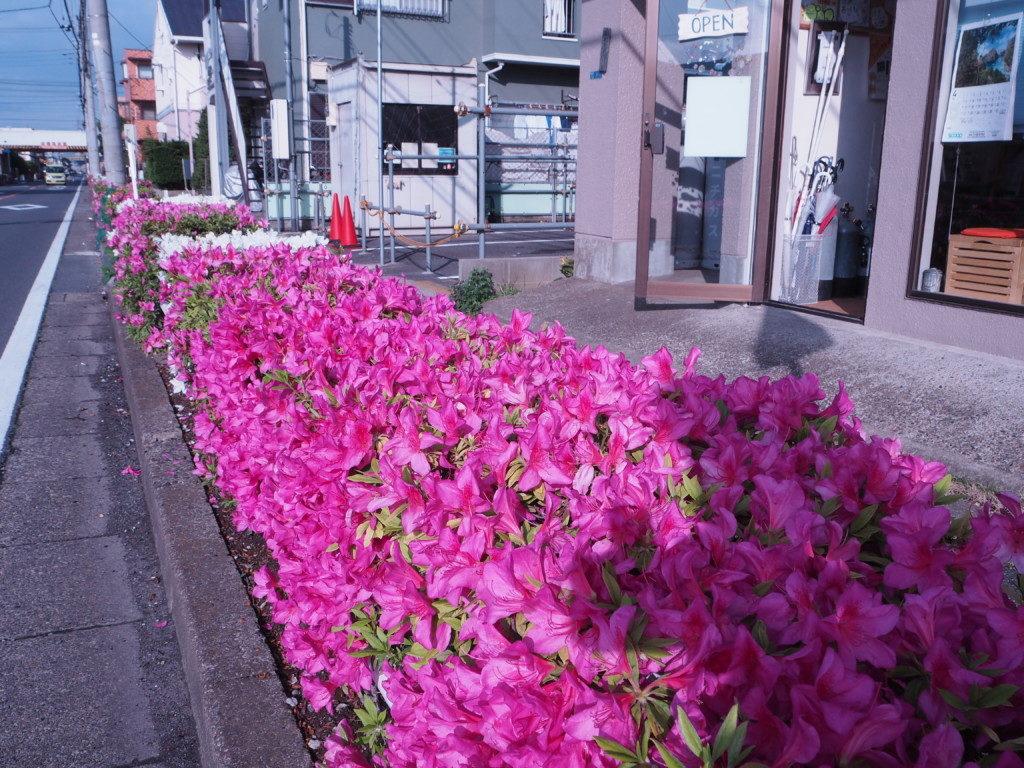 お店の前のお花
