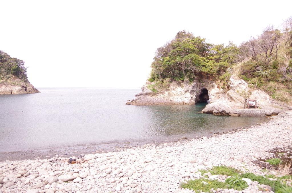 ウミウシツアーで西伊豆浮島へ