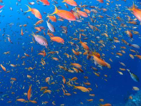 青い海と赤い海