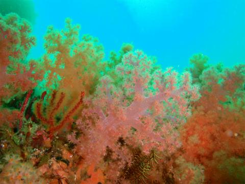 水中の色彩☆